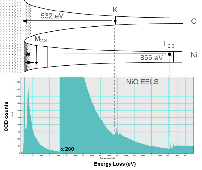 Correlation between EELS and specimen features