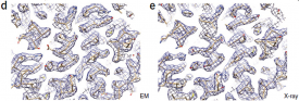 K2 camera helps identify first ~700 kDa protein structure with D7 symmetry at 3.3 Å resolution using cryo-EM