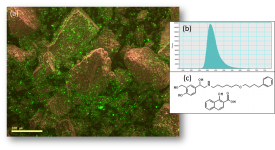 Revealing the distribution of organic materials in the SEM