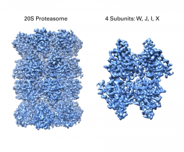 2.7 Å structure of the 20S Proteasome