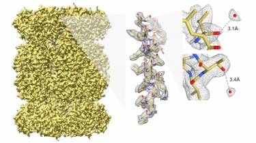 First 3D single-particle reconstruction of 20S Proteasome at 2.8 Å resolution